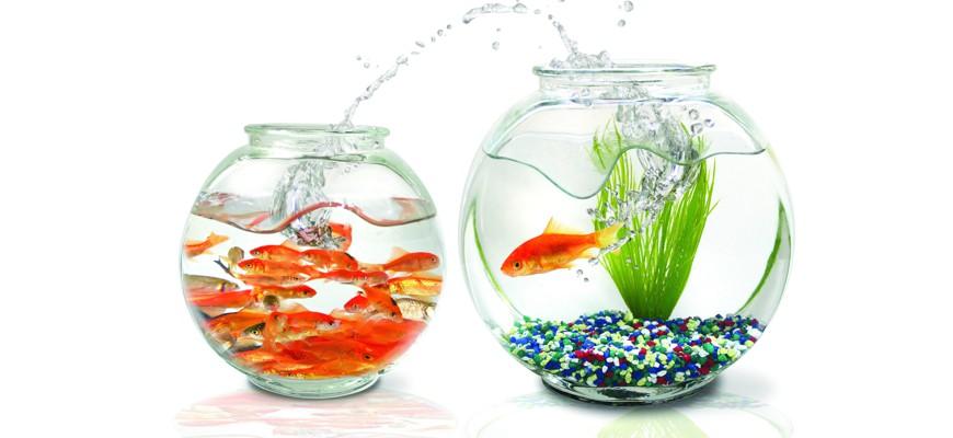 Разновидности аквариумных рыбок