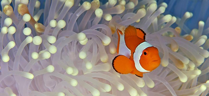 Мирные рыбки в аквариуме