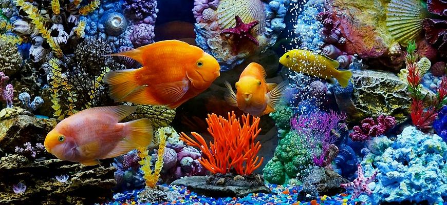 Рыбки ярких расцветок