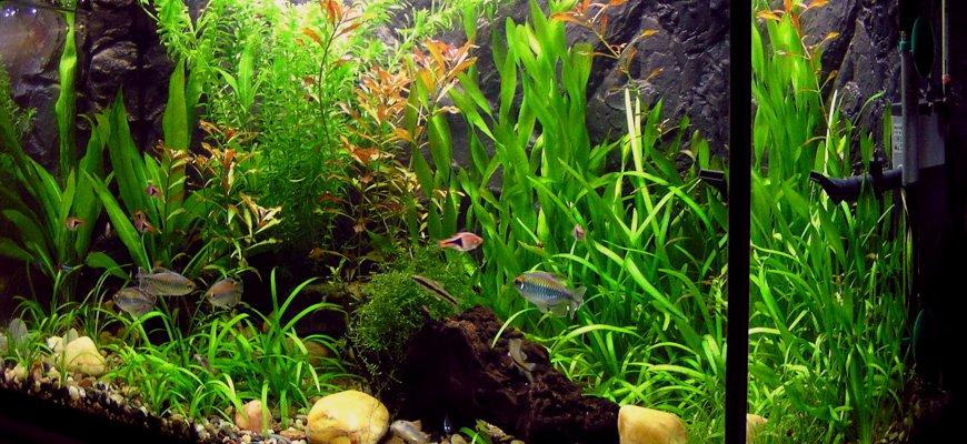 Растительность в аквариуме