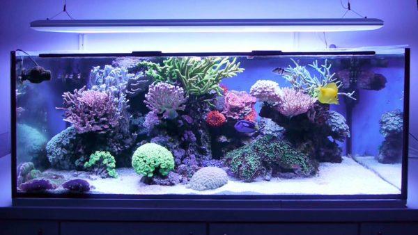Что учесть при выборе рыб и объёма аквариума