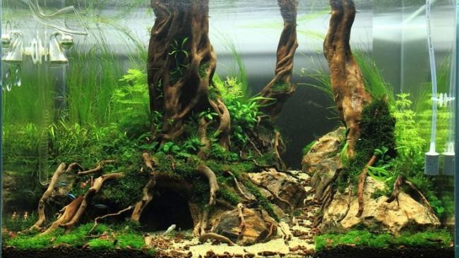 Изменения воды и древесины в аквариуме