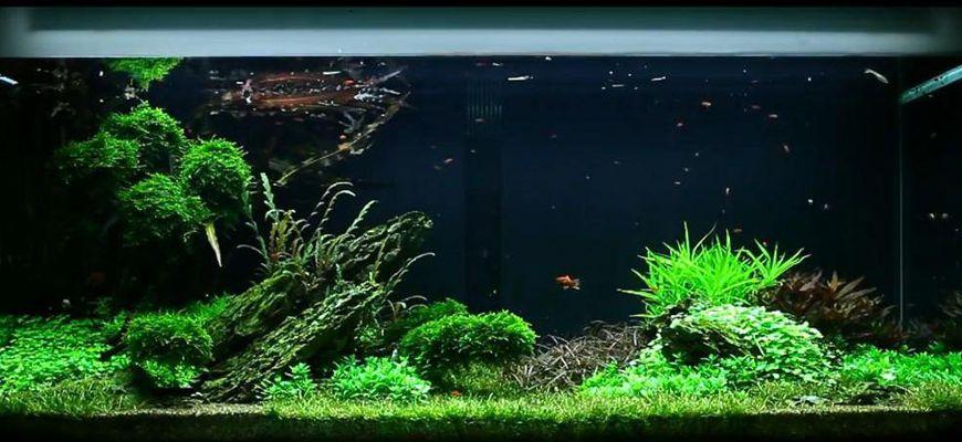 как оформить аквариум на 300 литров своими руками