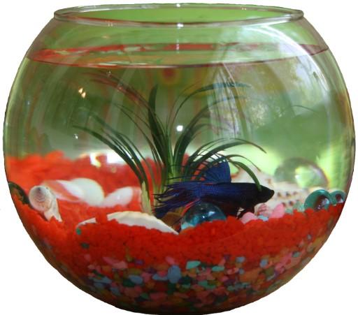 Какие аквариумы считаются маленькими