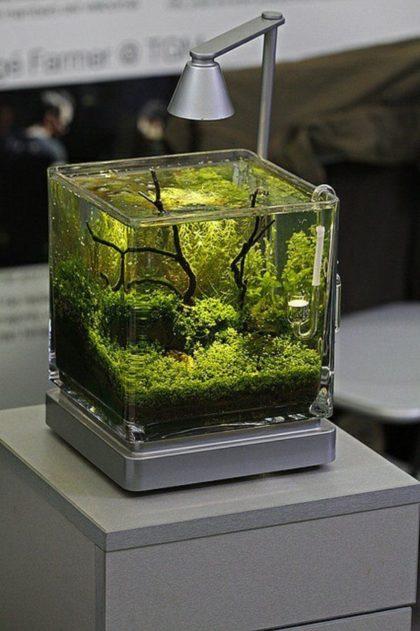 Маленький аквариум и оборудование для него
