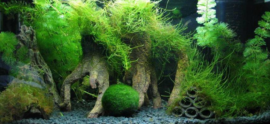 Мхи в аквариуме виды и названия с фото