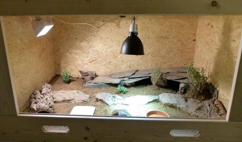 Оборудуем террариум для греческой черепахи