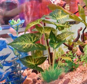 искусвенные аквариумные растения