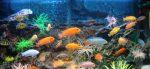 Для жизни рыб в аквариуме непригодна кипяченая вода