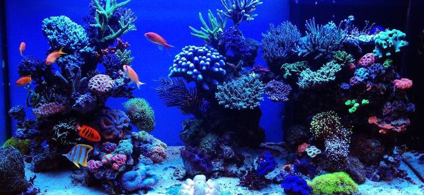 какие рыбки живут в аквариуме с морской водой
