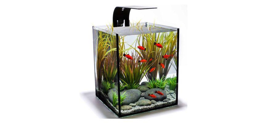 Какую рыбку завести в маленьком аквариуме для ребенка
