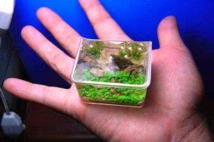 мини растения для аквариума