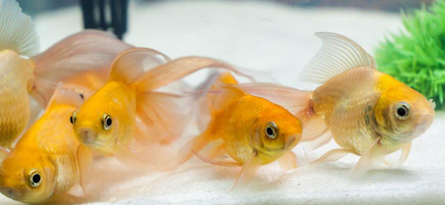 Сколько рыбок можно держать в аквариуме 110 литров