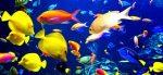 влияет ли громкая музыка на рыбок в аквариуме