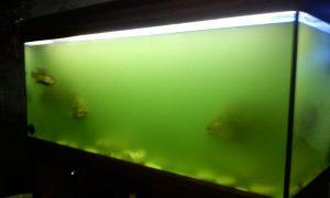муть в аквариуме