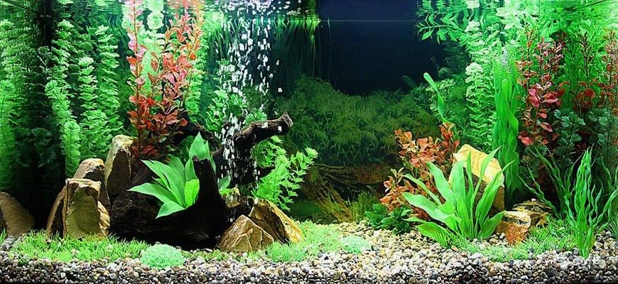 искуственные аквариумные растения