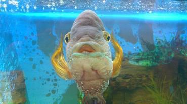 Что делать после того, как аквариум перевезен