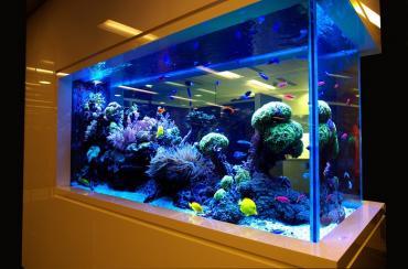 Как перевезти аквариум с рыбками