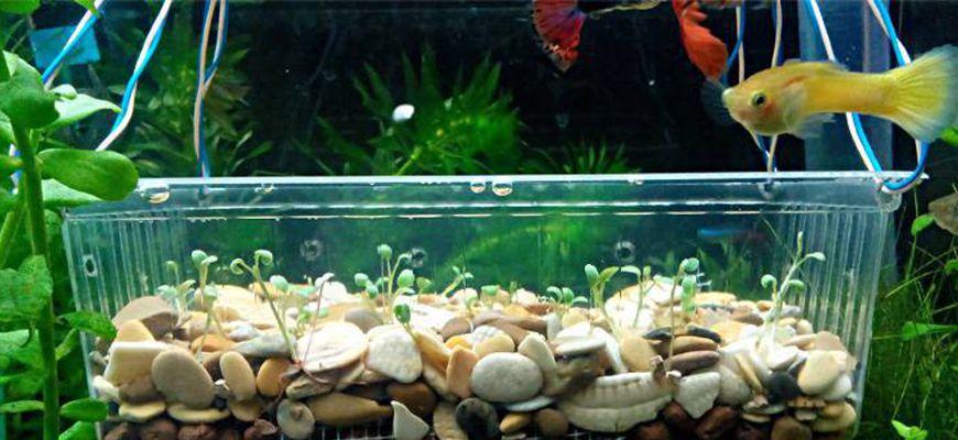 Как правильно выращивать растения из семян в аквариуме