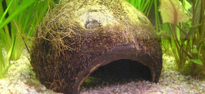 Как сделать домик для рыбок из кокоса