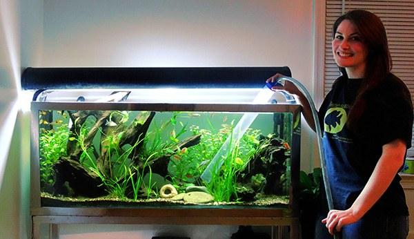 Правила ухода за аквариумом при аллергии