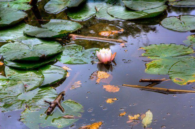Зимовка водных растений