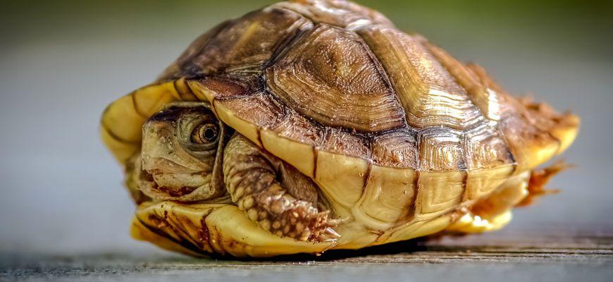 Черепаха плохо кушает и почти не двигается