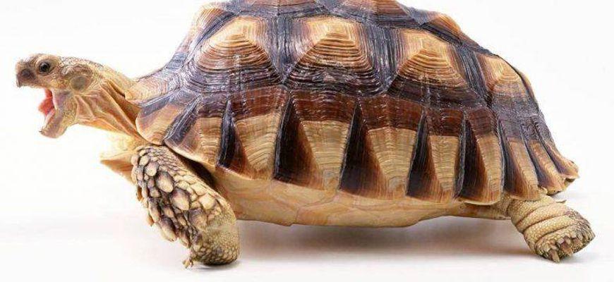 Что едят обычные черепахи в домашних условиях