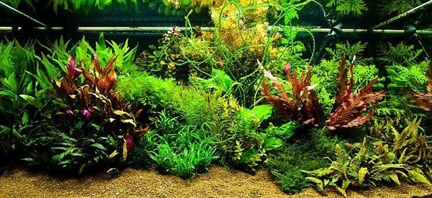 как обустроить аквариум для рыбок порядок действий