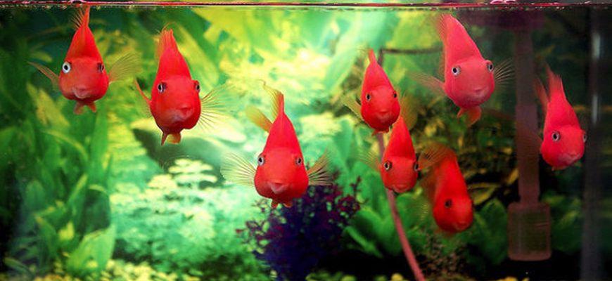 как правильно переселить рыбок в новый аквариум