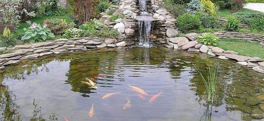 Куда девать рыбок из пруда на зиму