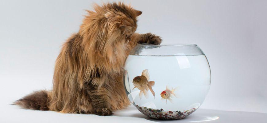можно ли заводить рыбок если есть кошка