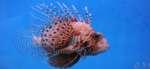 Аквариумные рыбки-хищники