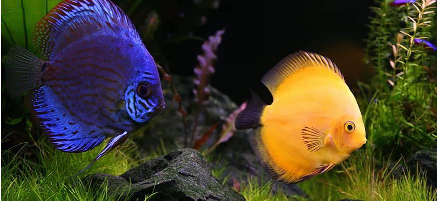 akvariumnie ribki
